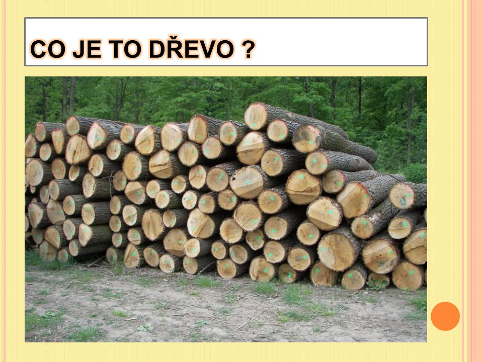 CO JE TO DŘEVO