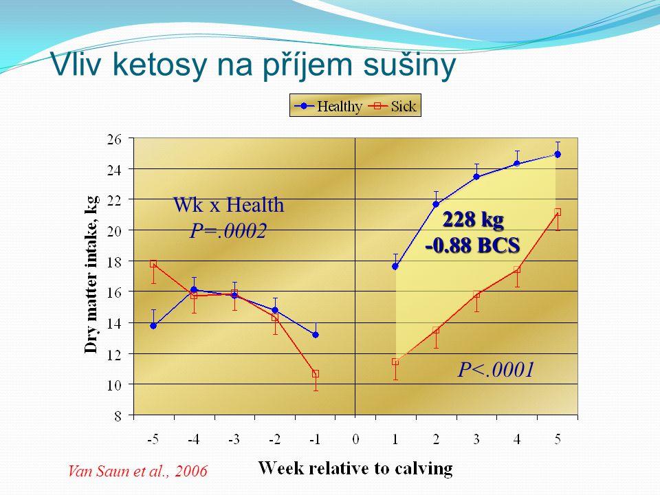 Vliv ketosy na příjem sušiny