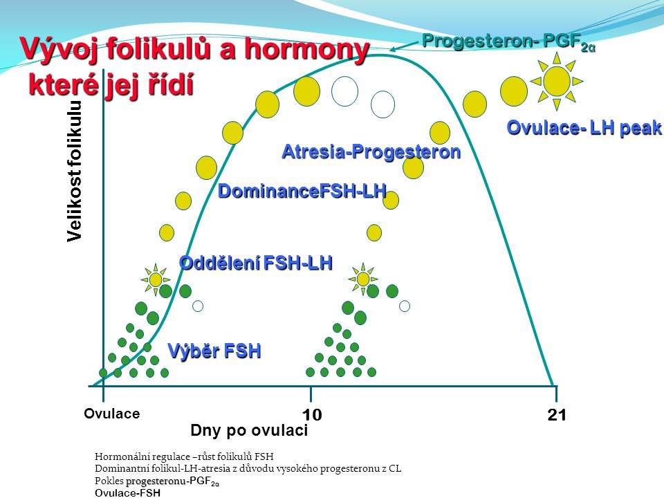 Vývoj folikulů a hormony které jej řídí