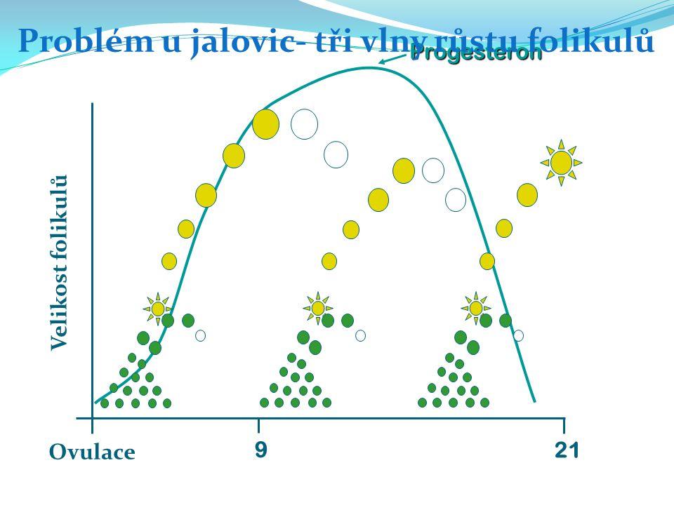Problém u jalovic- tři vlny růstu folikulů
