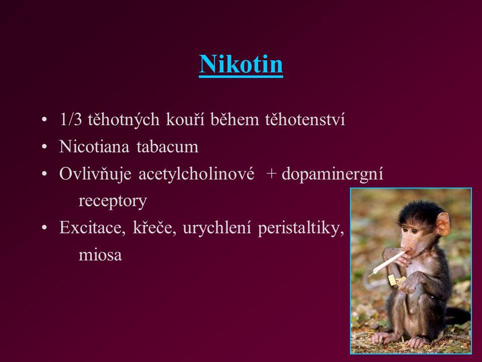 Nikotin 1/3 těhotných kouří během těhotenství Nicotiana tabacum