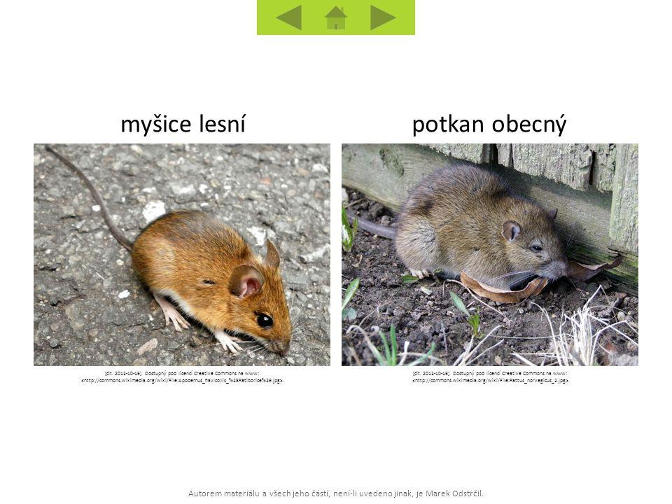 myšice lesní potkan obecný