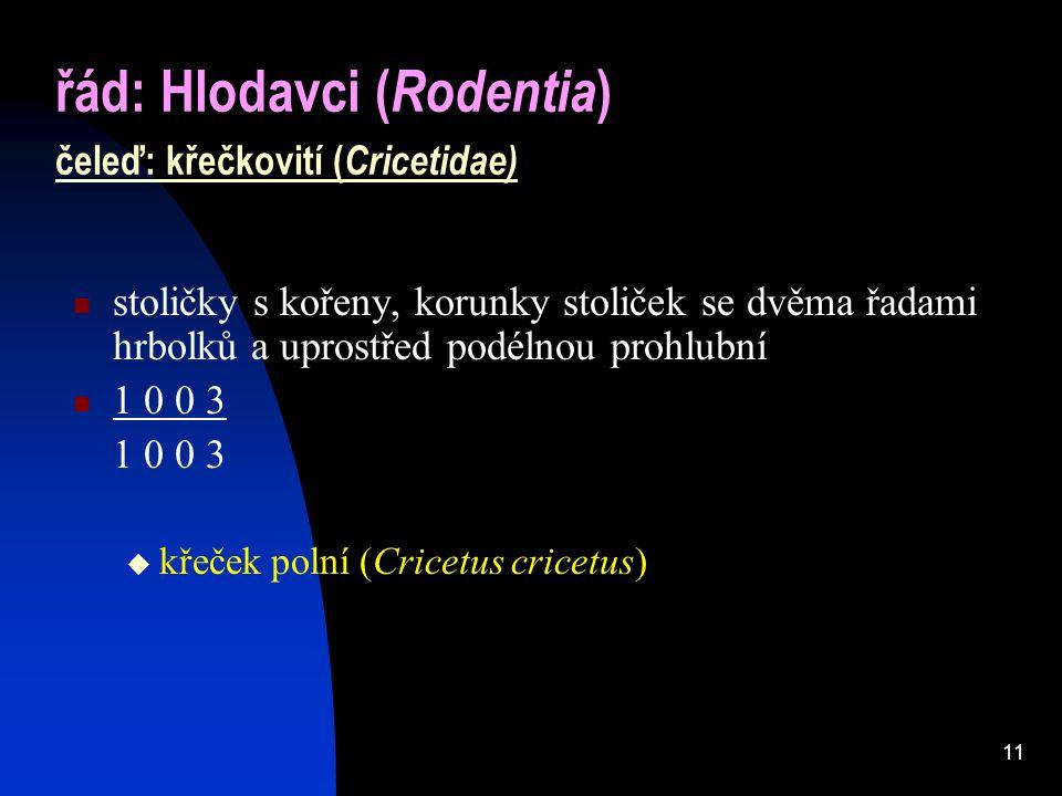 řád: Hlodavci (Rodentia) čeleď: křečkovití (Cricetidae)