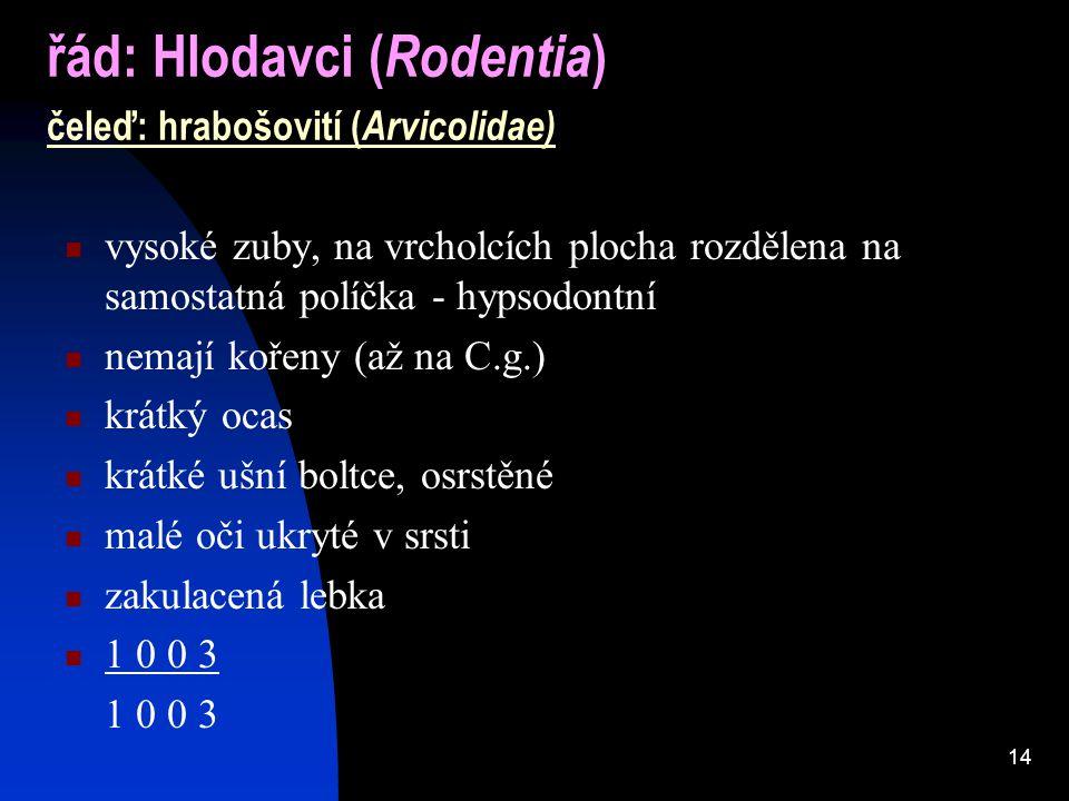 řád: Hlodavci (Rodentia) čeleď: hrabošovití (Arvicolidae)