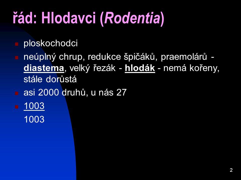 řád: Hlodavci (Rodentia)