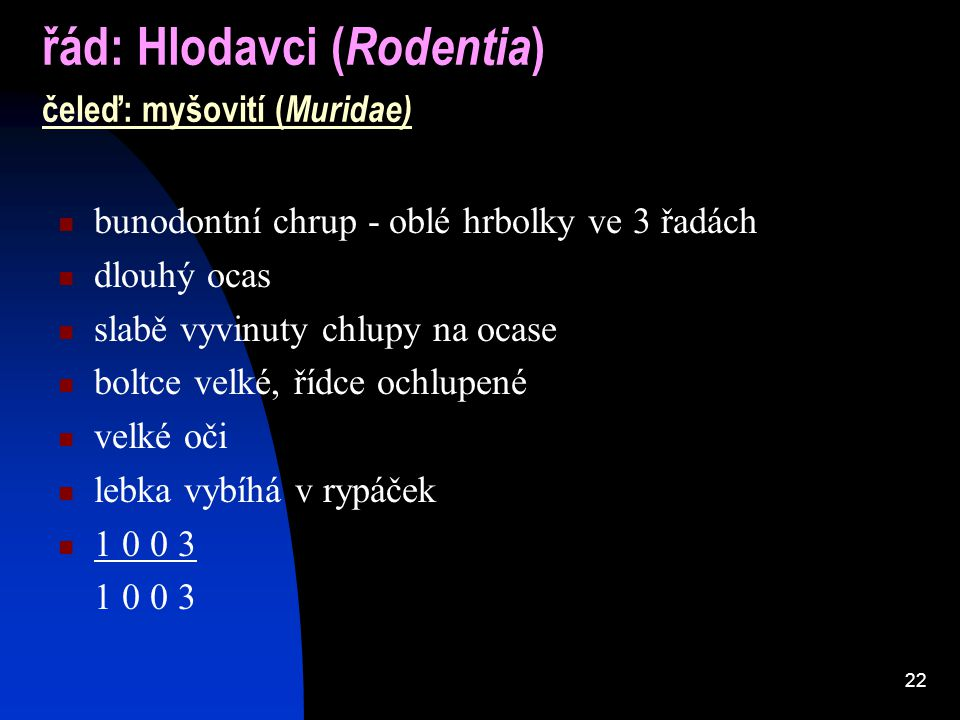 řád: Hlodavci (Rodentia) čeleď: myšovití (Muridae)