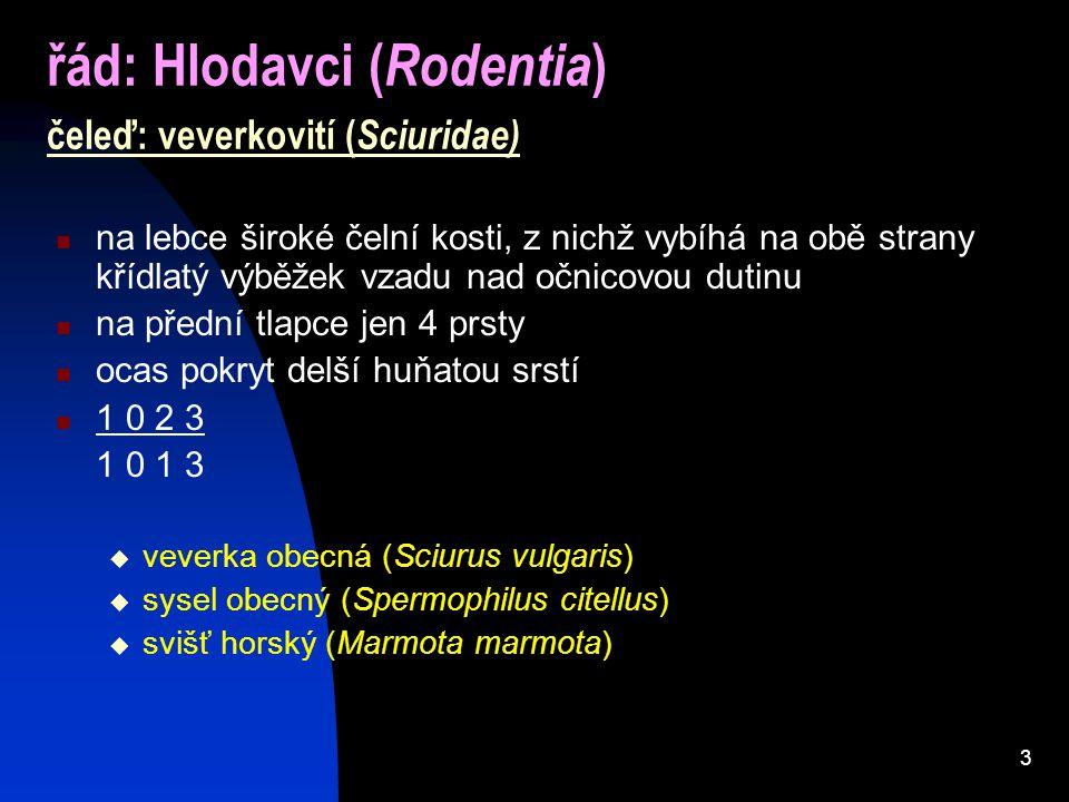 řád: Hlodavci (Rodentia) čeleď: veverkovití (Sciuridae)