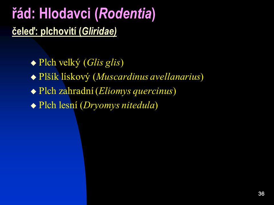 řád: Hlodavci (Rodentia) čeleď: plchovití (Gliridae)