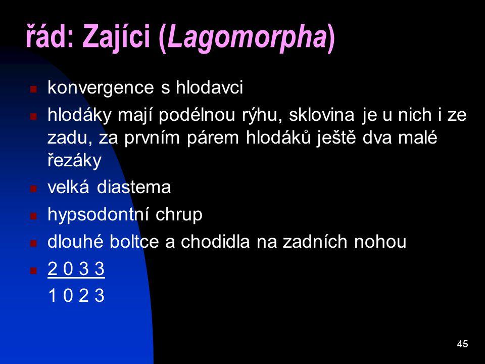 řád: Zajíci (Lagomorpha)