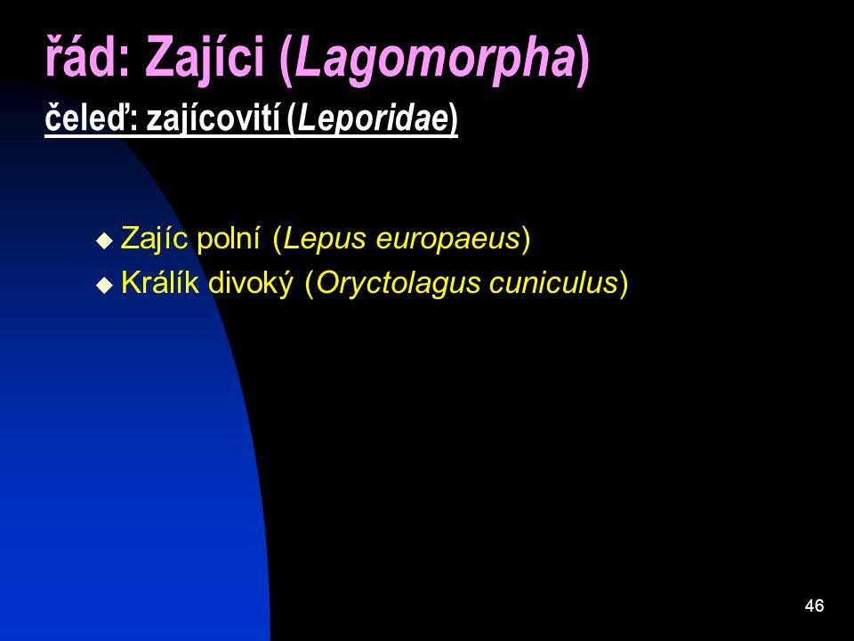řád: Zajíci (Lagomorpha) čeleď: zajícovití (Leporidae)