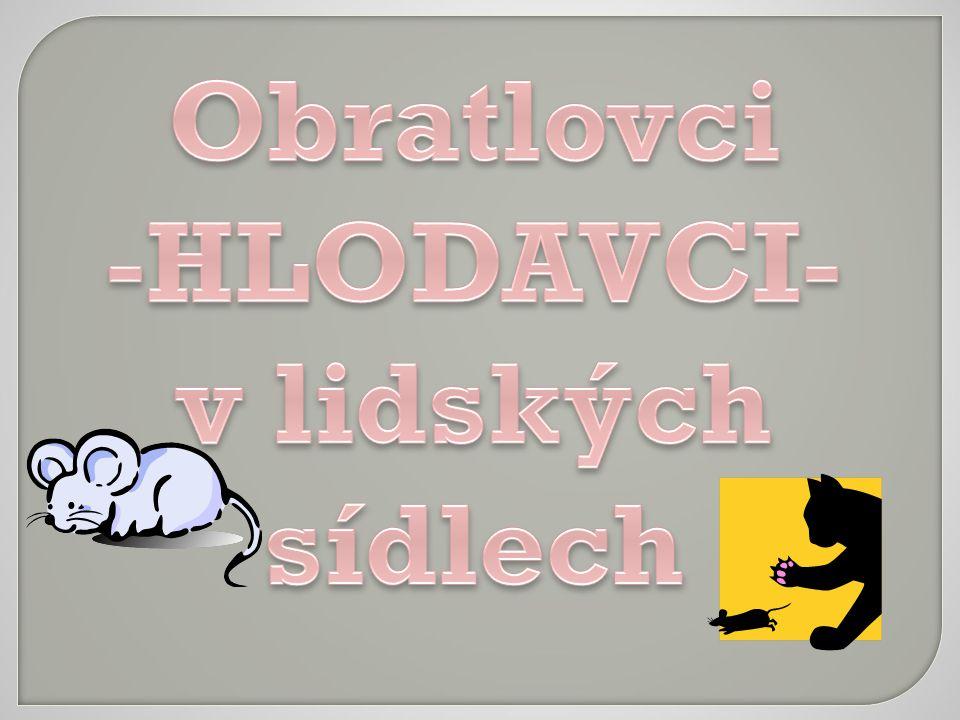 Obratlovci -HLODAVCI-