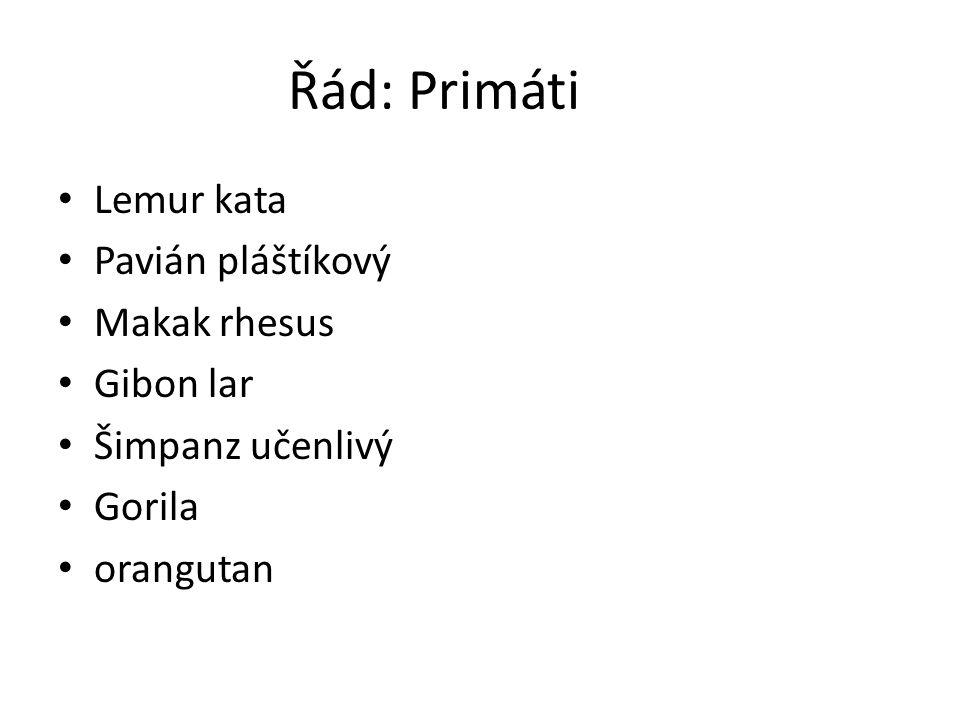 Řád: Primáti Lemur kata Pavián pláštíkový Makak rhesus Gibon lar