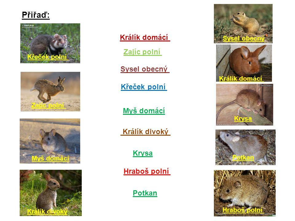Přiřaď: Králík domácí Zajíc polní Sysel obecný Křeček polní Myš domácí