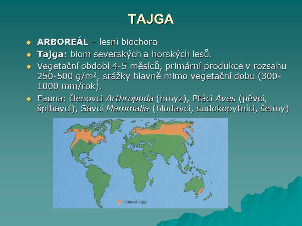 TAJGA ARBOREÁL – lesní biochora