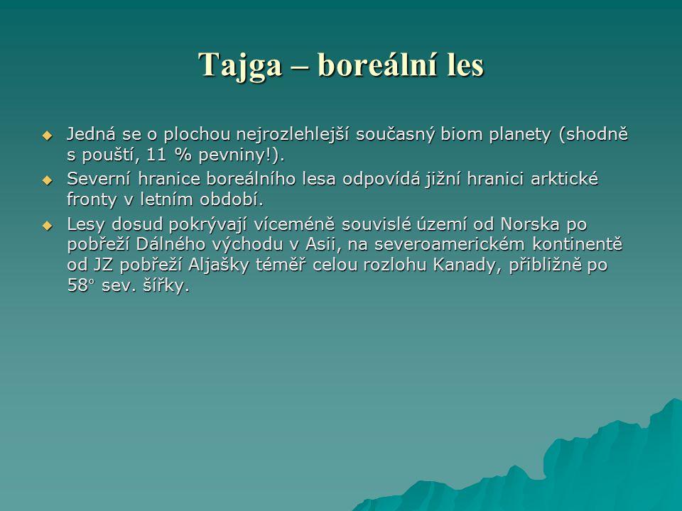 Tajga – boreální les Jedná se o plochou nejrozlehlejší současný biom planety (shodně s pouští, 11 % pevniny!).