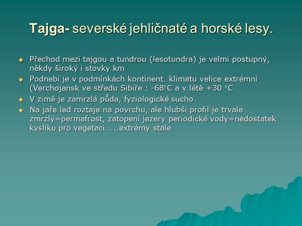 Tajga- severské jehličnaté a horské lesy.