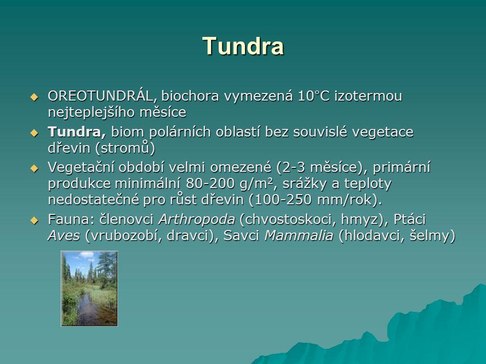 Tundra OREOTUNDRÁL, biochora vymezená 10°C izotermou nejteplejšího měsíce. Tundra, biom polárních oblastí bez souvislé vegetace dřevin (stromů)