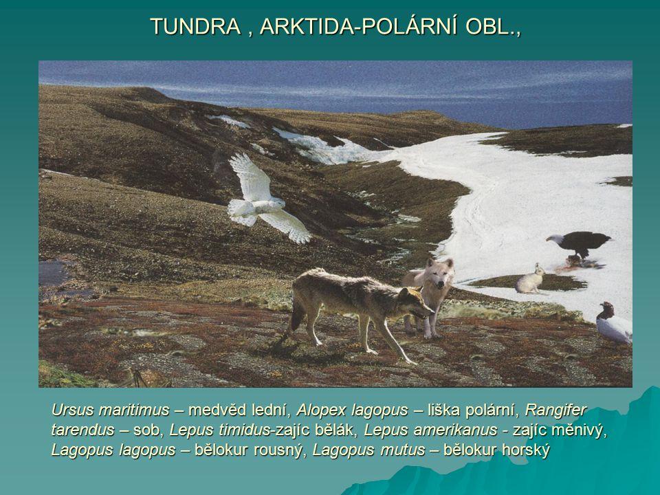 TUNDRA , ARKTIDA-POLÁRNÍ OBL.,