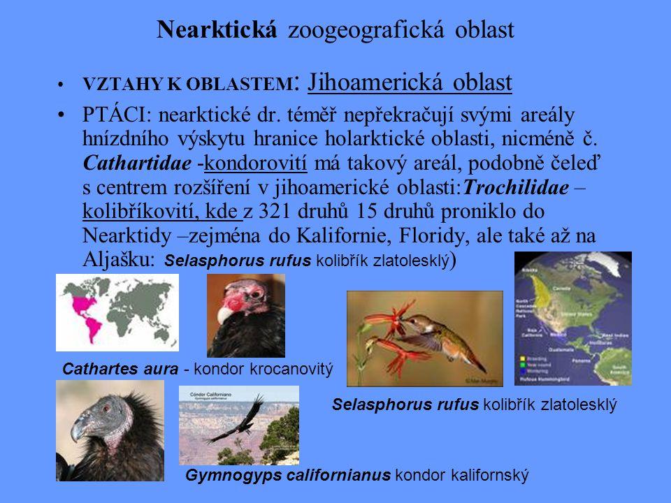 Nearktická zoogeografická oblast