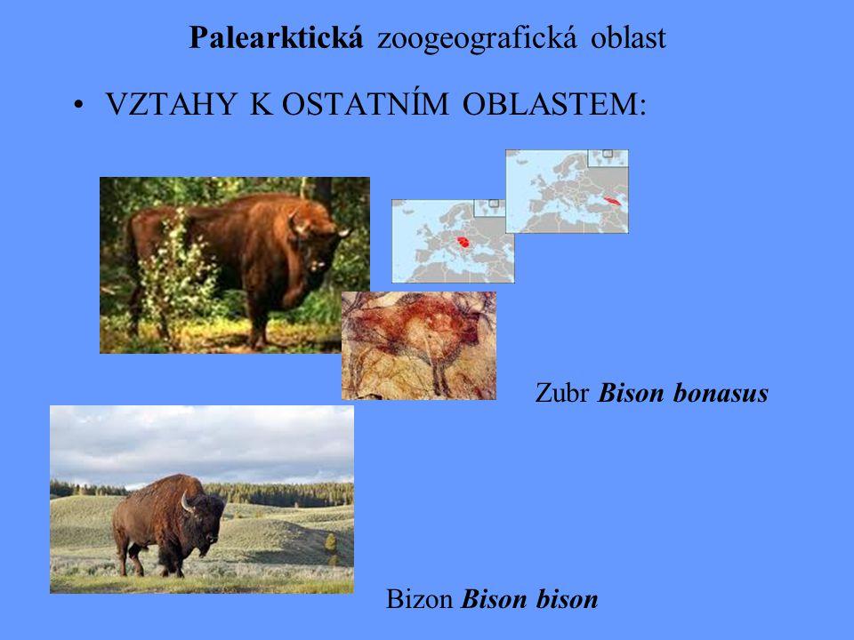 Palearktická zoogeografická oblast