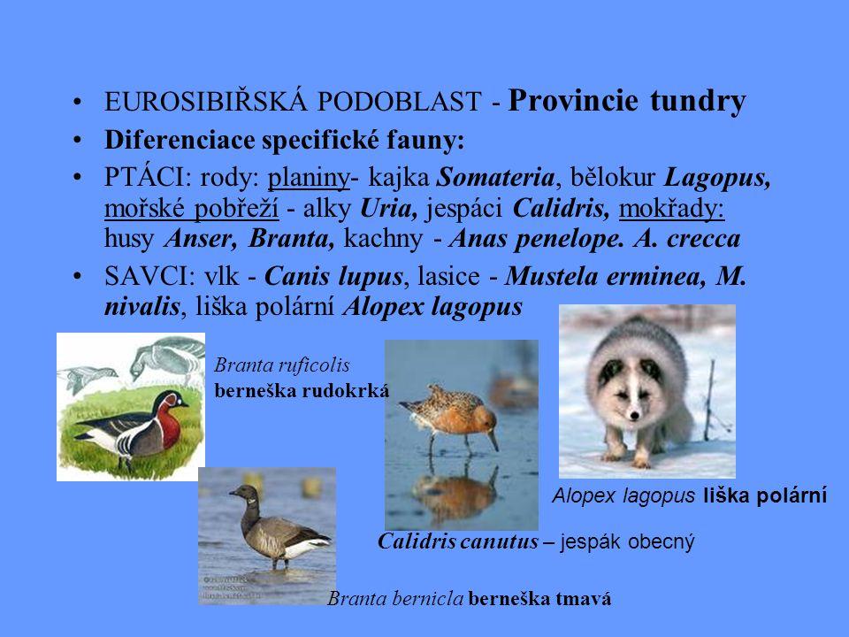 EUROSIBIŘSKÁ PODOBLAST - Provincie tundry