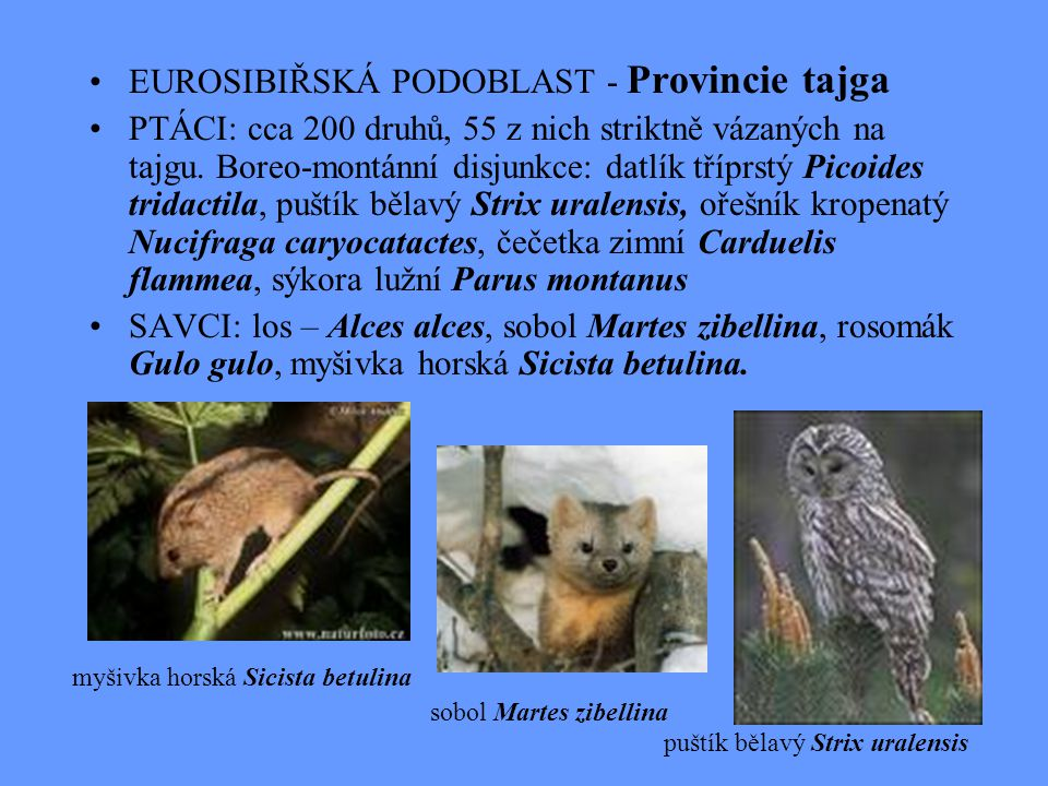 EUROSIBIŘSKÁ PODOBLAST - Provincie tajga