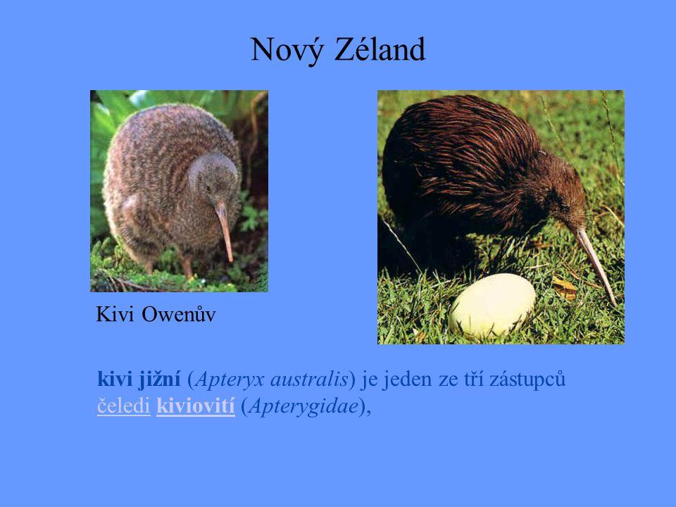 Nový Zéland Kivi Owenův