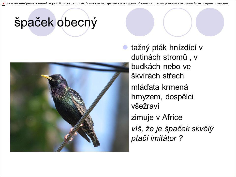 špaček obecný tažný pták hnízdící v dutinách stromů , v budkách nebo ve škvírách střech. mláďata krmená hmyzem, dospělci všežraví.