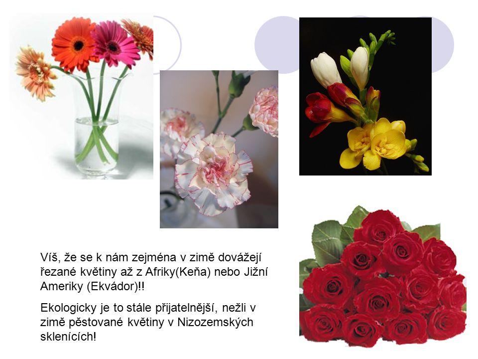 Víš, že se k nám zejména v zimě dovážejí řezané květiny až z Afriky(Keňa) nebo Jižní Ameriky (Ekvádor)!!