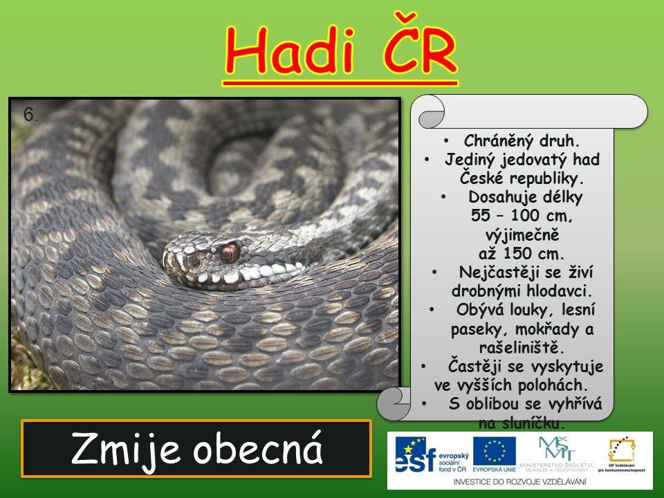 Hadi ČR Zmije obecná 6. Chráněný druh.