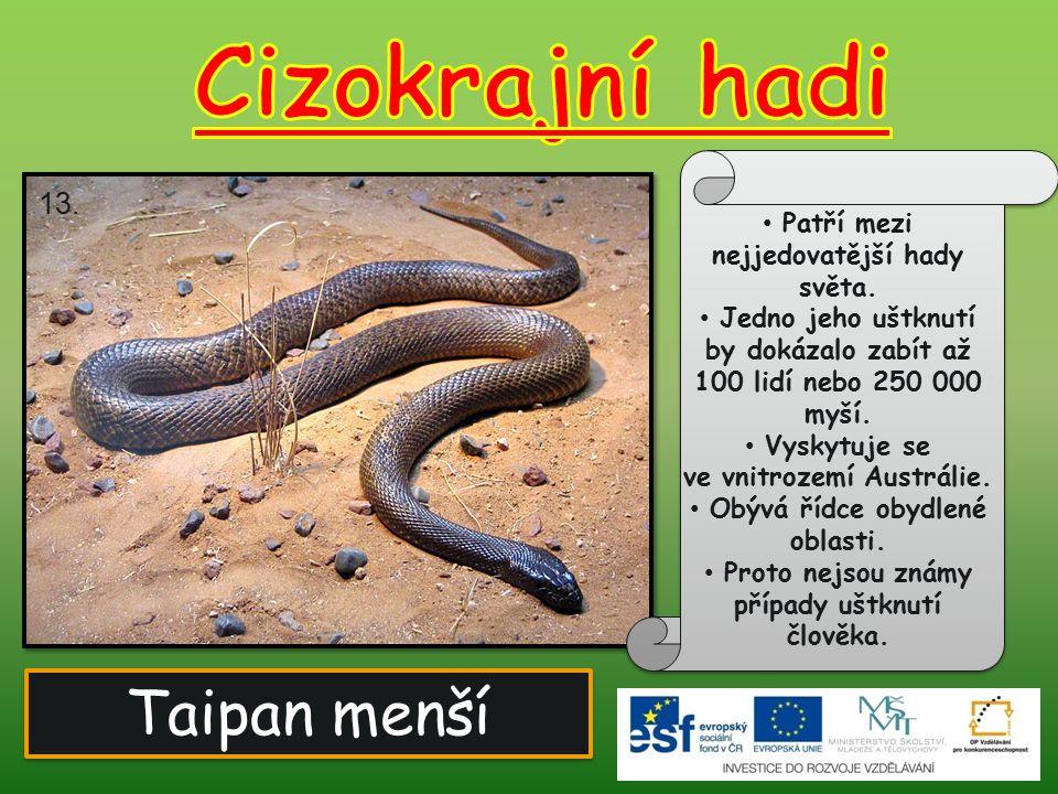 Cizokrajní hadi Taipan menší 13. Patří mezi nejjedovatější hady světa.