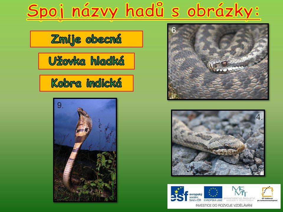 Spoj názvy hadů s obrázky: