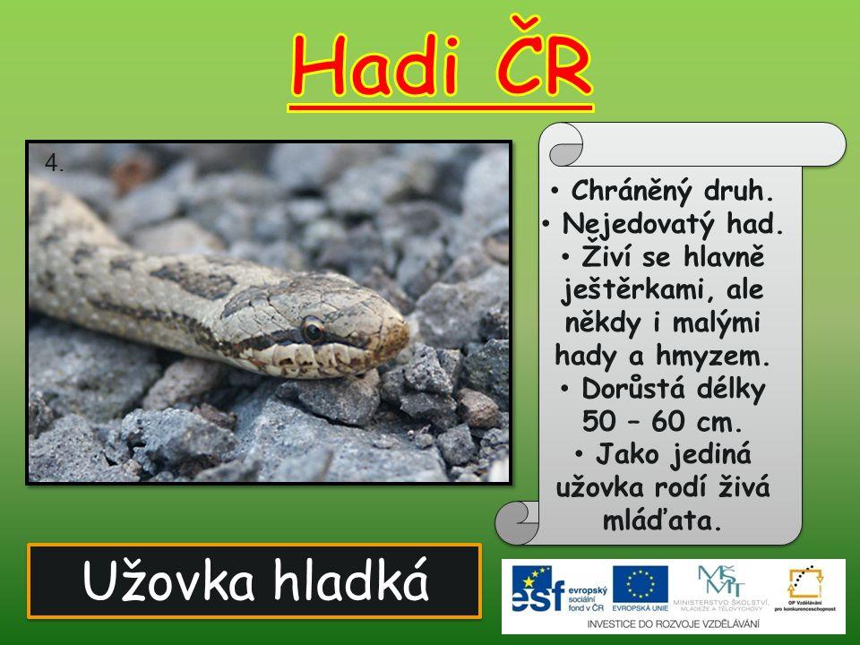 Hadi ČR Užovka hladká Chráněný druh. Nejedovatý had.