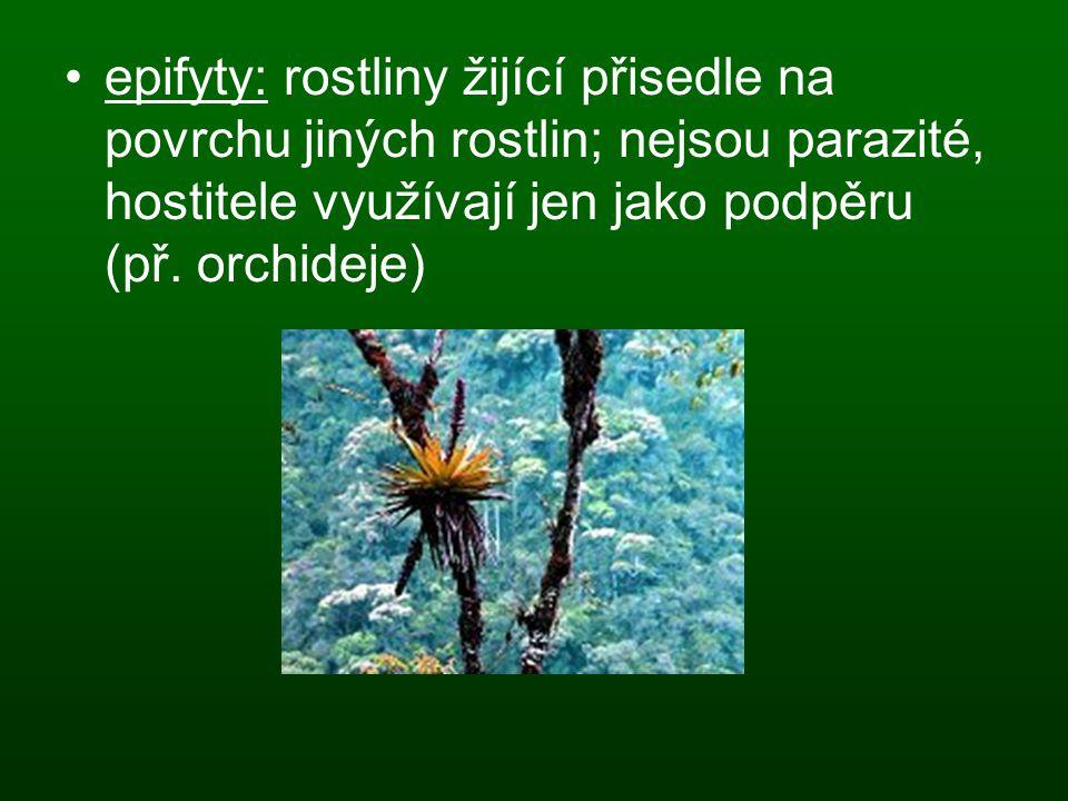 epifyty: rostliny žijící přisedle na povrchu jiných rostlin; nejsou parazité, hostitele využívají jen jako podpěru (př.
