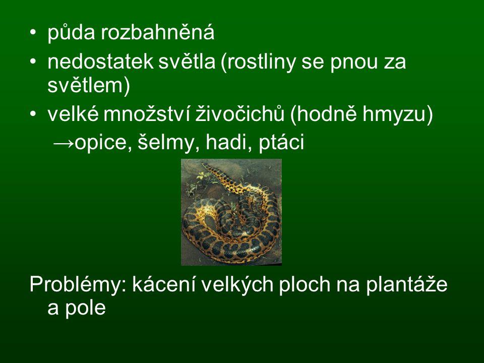 půda rozbahněná nedostatek světla (rostliny se pnou za světlem) velké množství živočichů (hodně hmyzu)