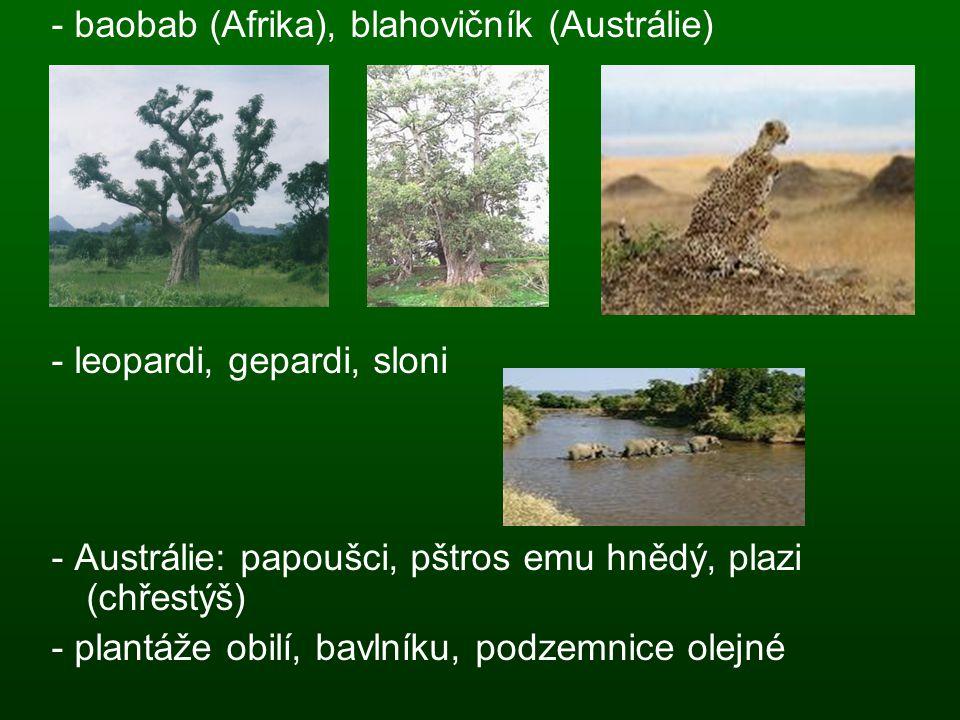 - baobab (Afrika), blahovičník (Austrálie)
