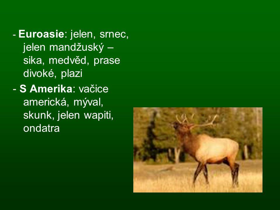- S Amerika: vačice americká, mýval, skunk, jelen wapiti, ondatra