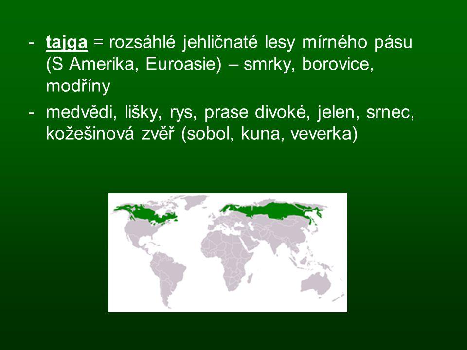 tajga = rozsáhlé jehličnaté lesy mírného pásu (S Amerika, Euroasie) – smrky, borovice, modříny