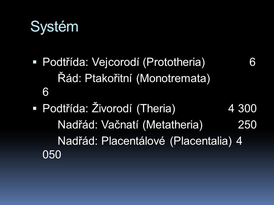 Systém Podtřída: Vejcorodí (Prototheria) 6