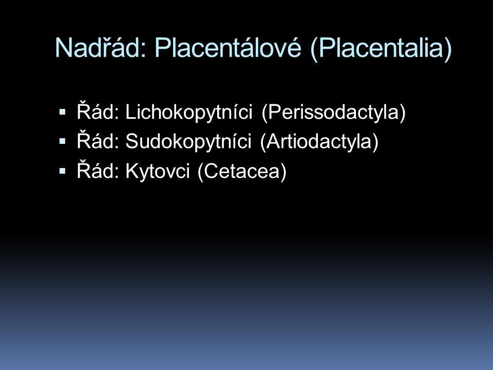 Nadřád: Placentálové (Placentalia)