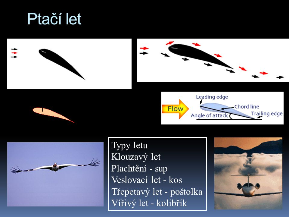 Ptačí let Typy letu Klouzavý let Plachtění - sup Veslovací let - kos