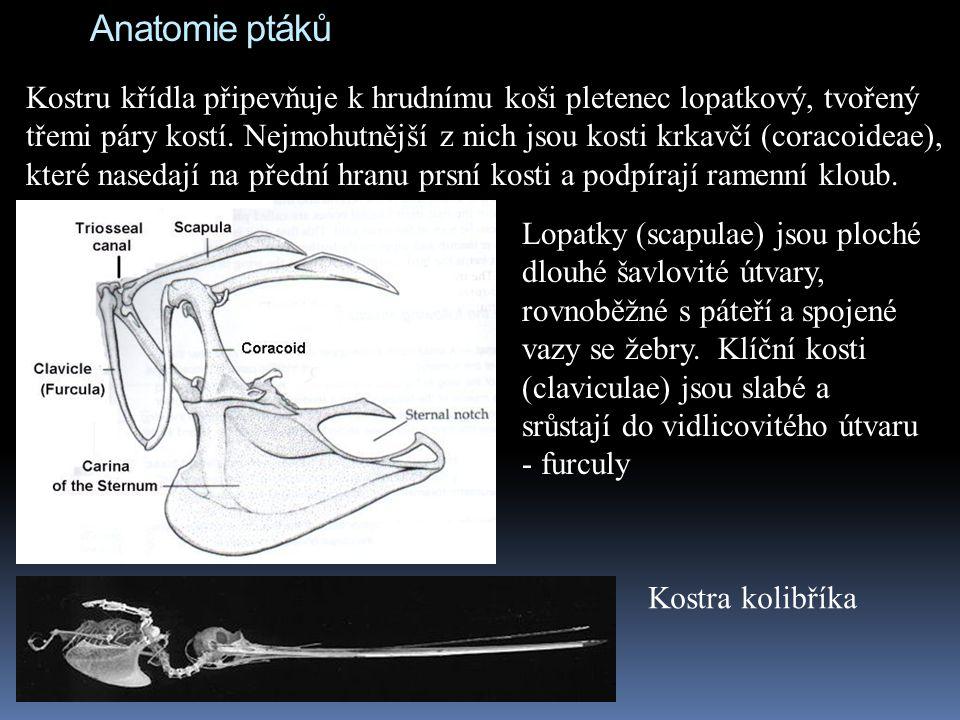 Anatomie ptáků