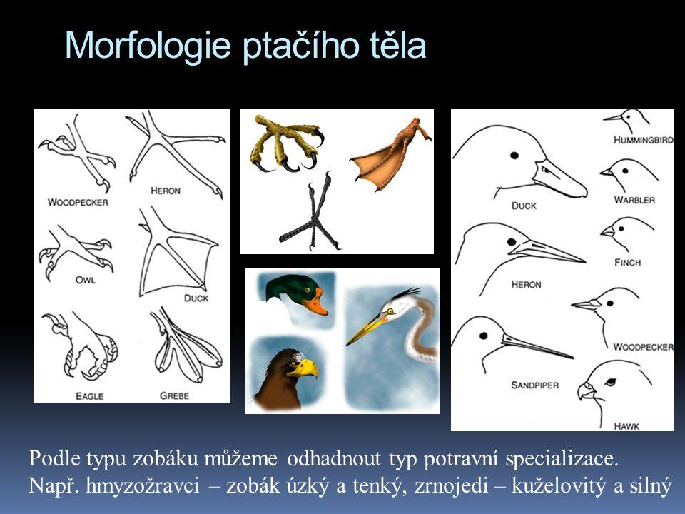 Morfologie ptačího těla