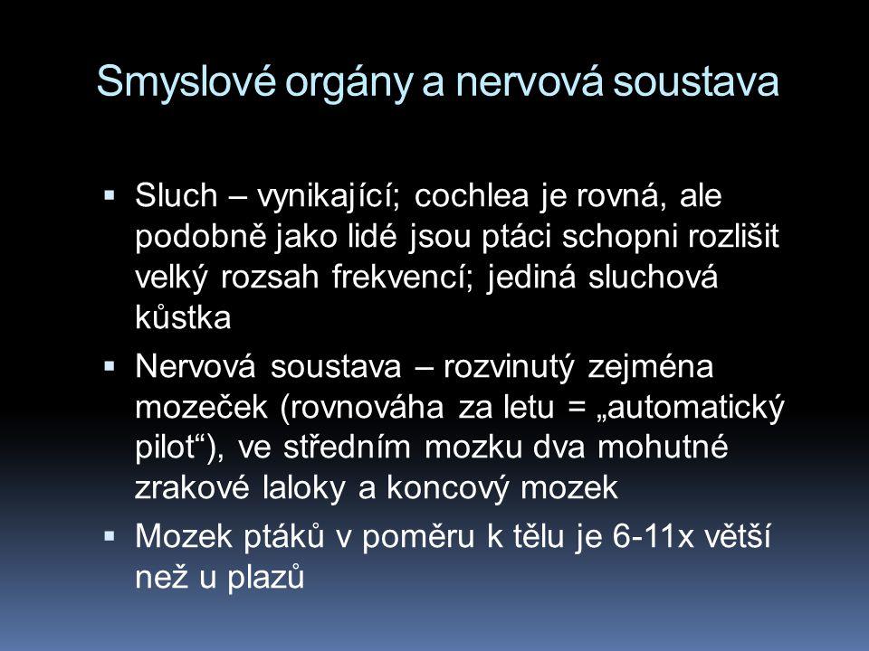 Smyslové orgány a nervová soustava