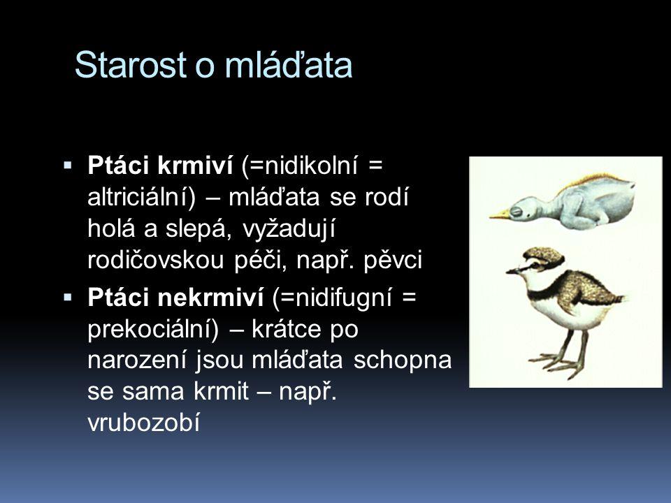 Starost o mláďata Ptáci krmiví (=nidikolní = altriciální) – mláďata se rodí holá a slepá, vyžadují rodičovskou péči, např. pěvci.