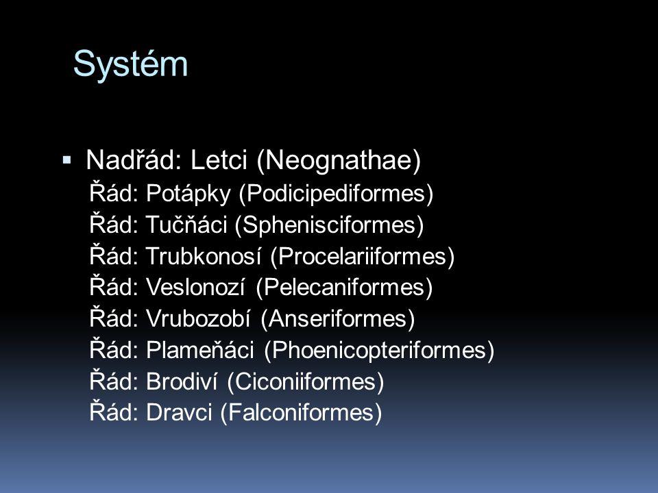 Systém Nadřád: Letci (Neognathae) Řád: Potápky (Podicipediformes)