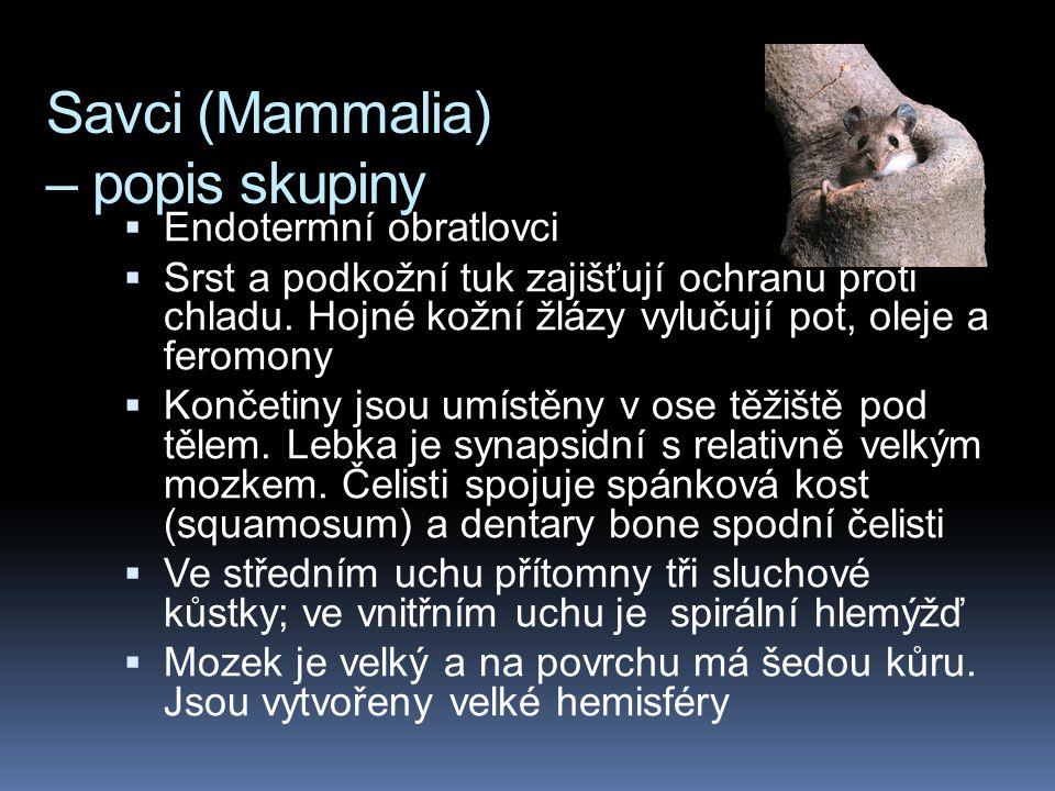 Savci (Mammalia) – popis skupiny