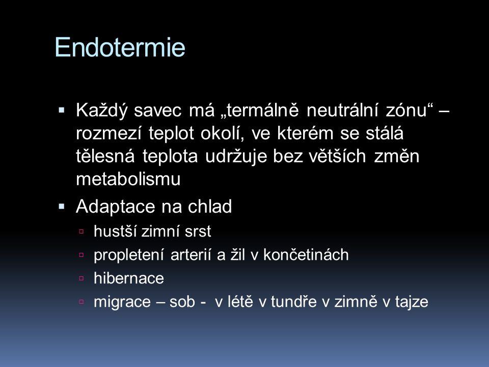 Endotermie