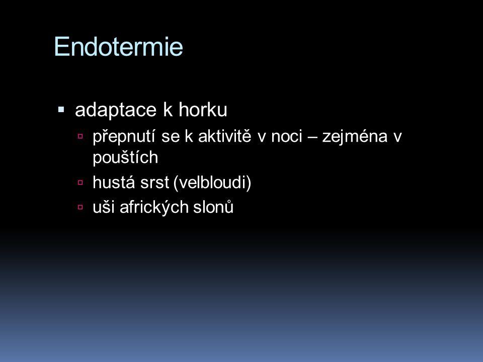 Endotermie adaptace k horku