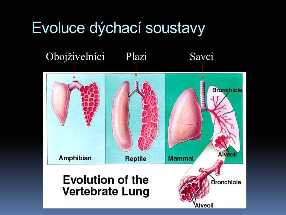Evoluce dýchací soustavy